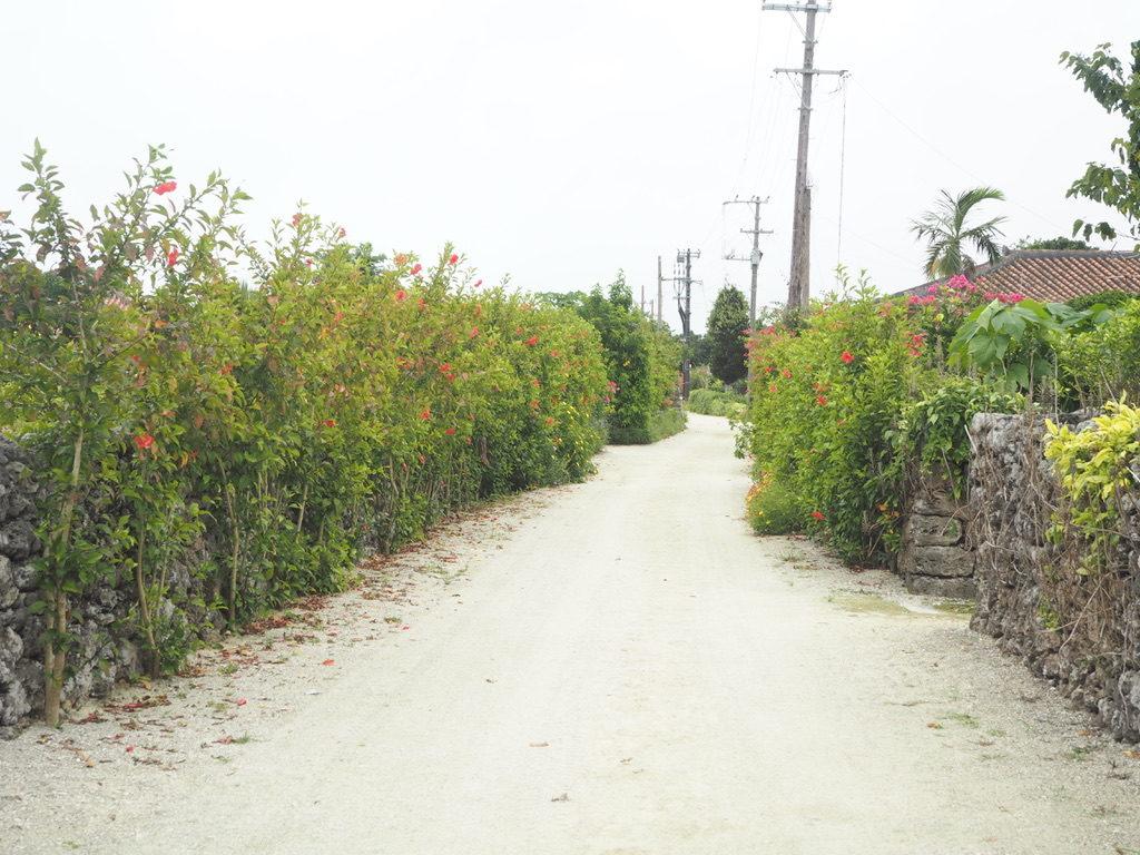 ハーヤナゴミカフェ 前の道