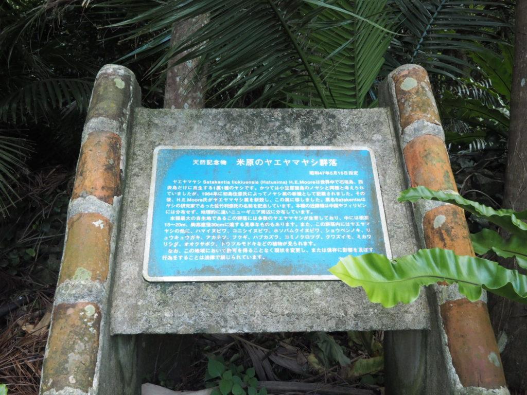 米原のヤエヤマヤシ群落 看板