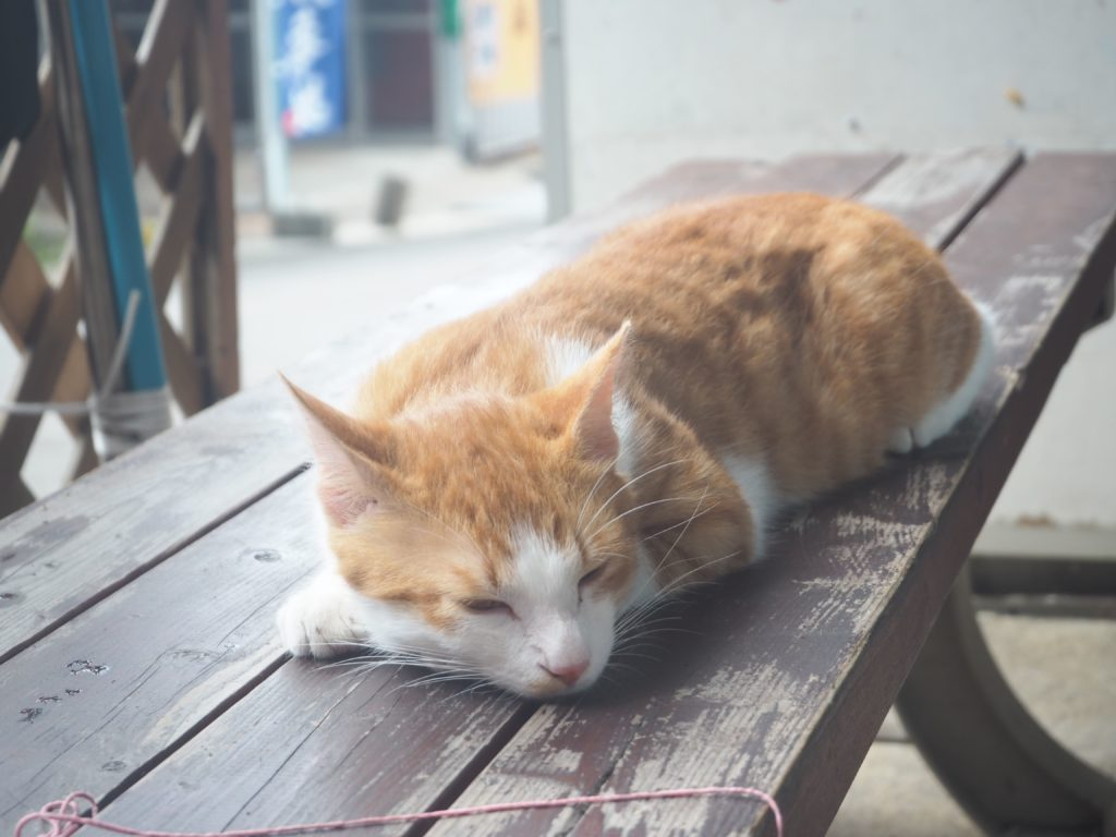 ぱぱ屋 猫