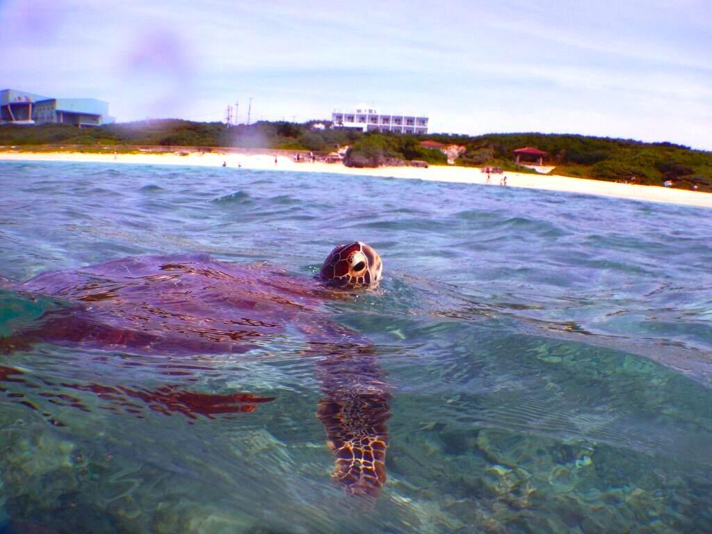 ニシ浜 ウミガメ