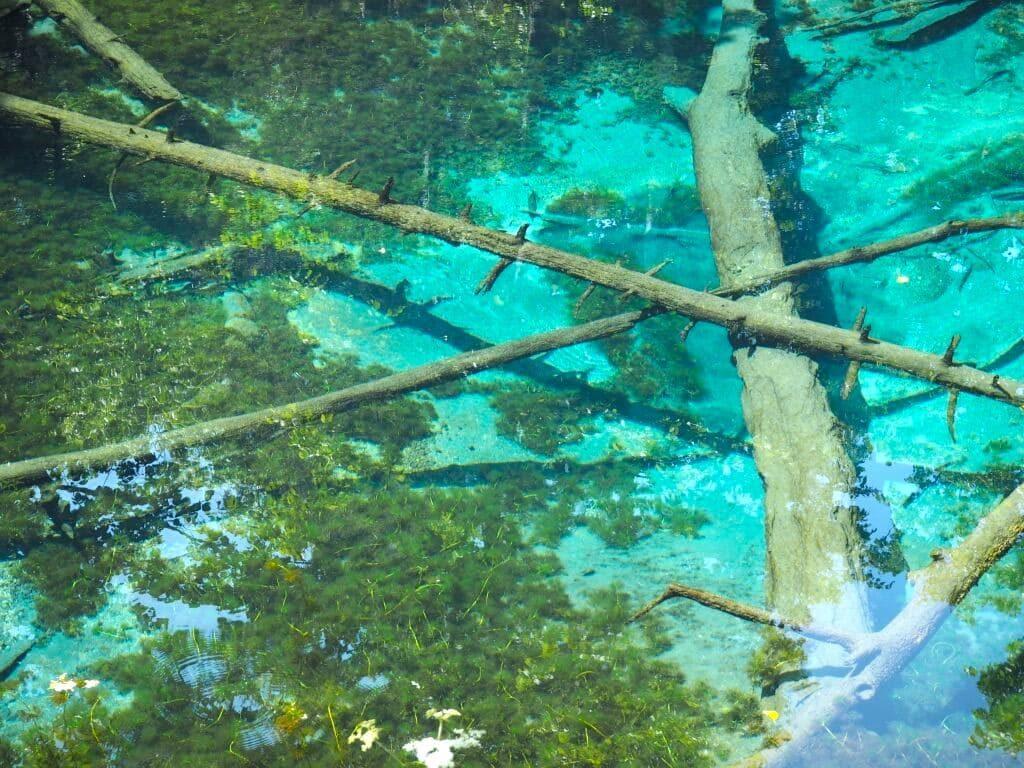 池底 アップ