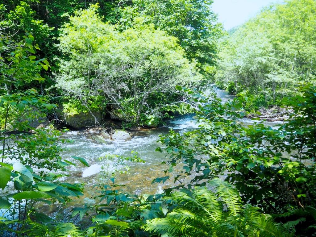 さくらの滝 木々