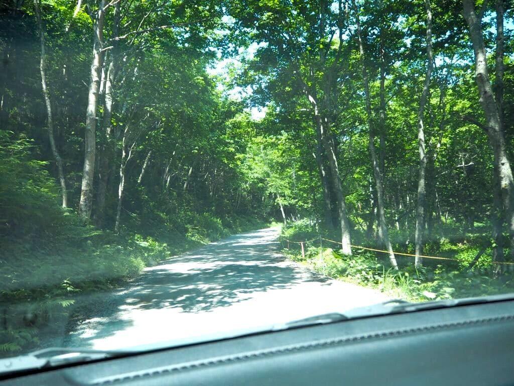 ハトイ林道