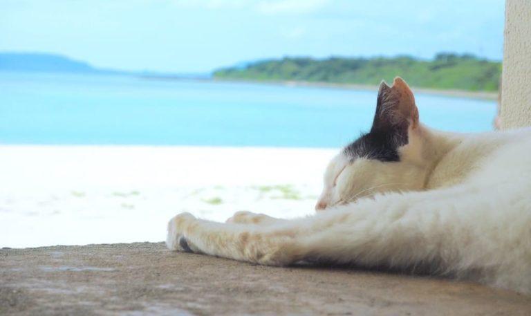 猫 コンドイビーチ