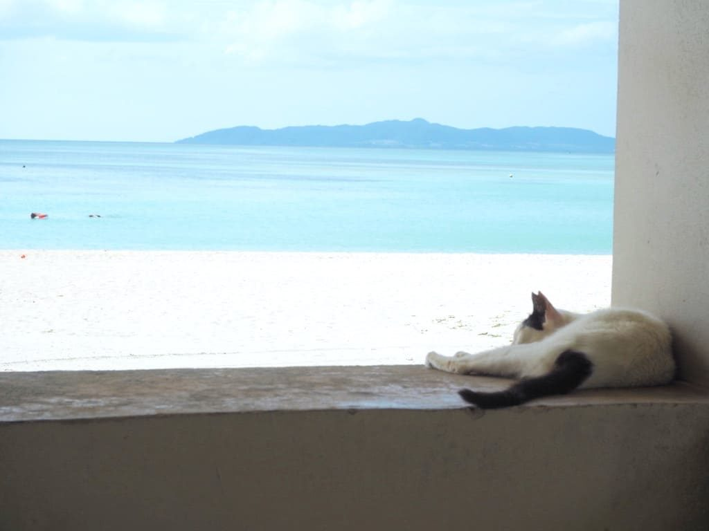 ビーチと猫