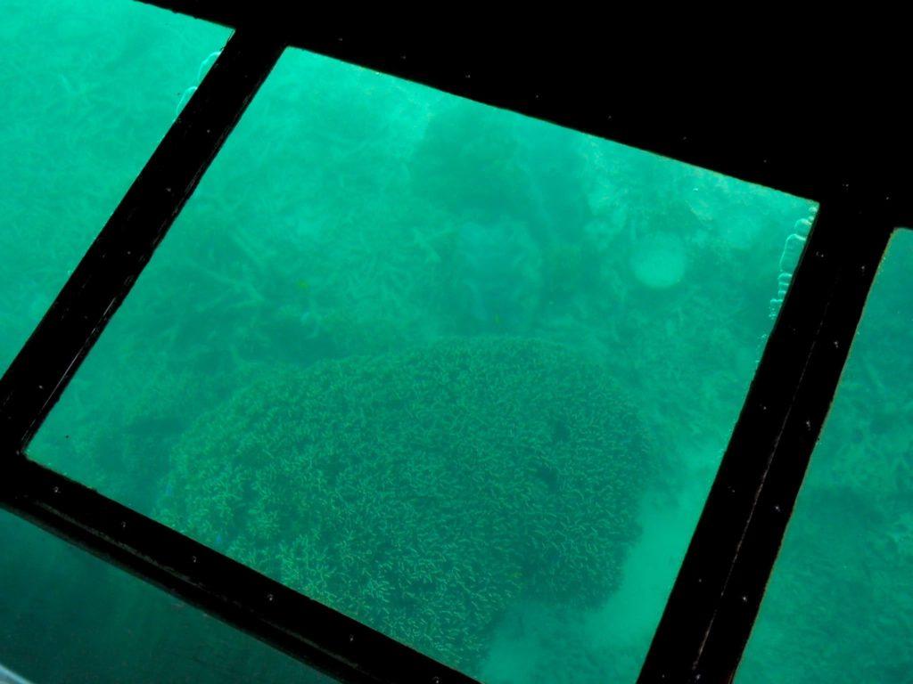 浅瀬にあるサンゴ礁