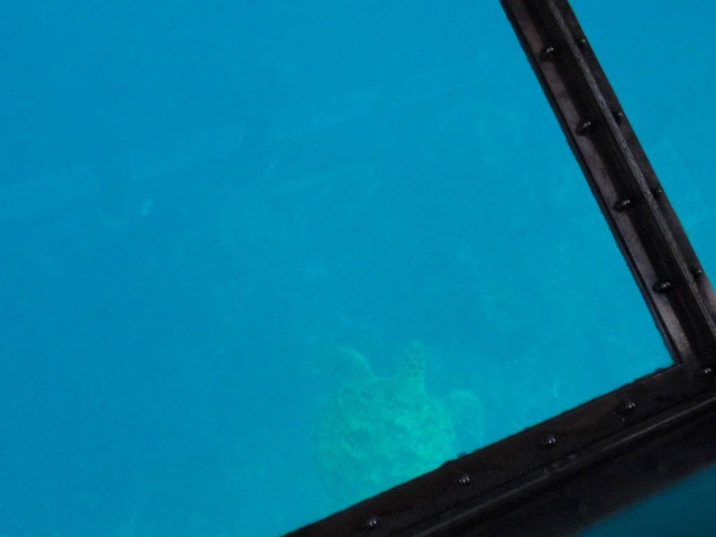 海底 ウミガメ