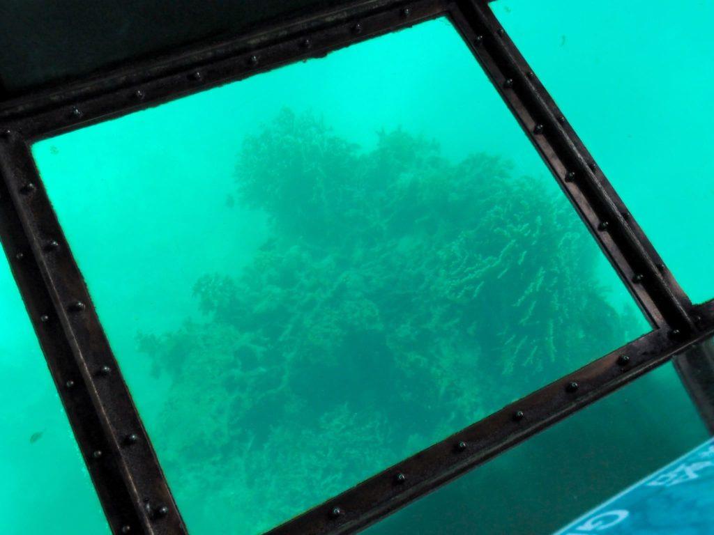 沖にあったサンゴ礁