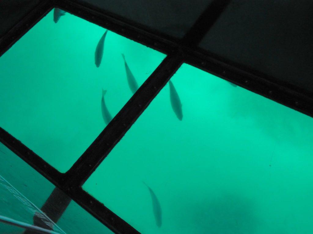 大きな魚の群れ